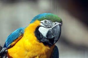 assurance-vie-perroquet